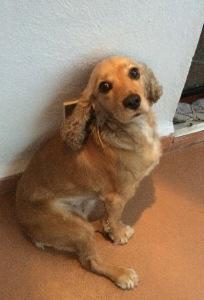 Greta, mi amiga en Cuernavaca. Mira sus ojos tristes.